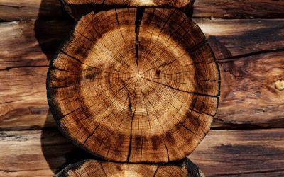 Rompiendo mitos sobre la madera en construcción