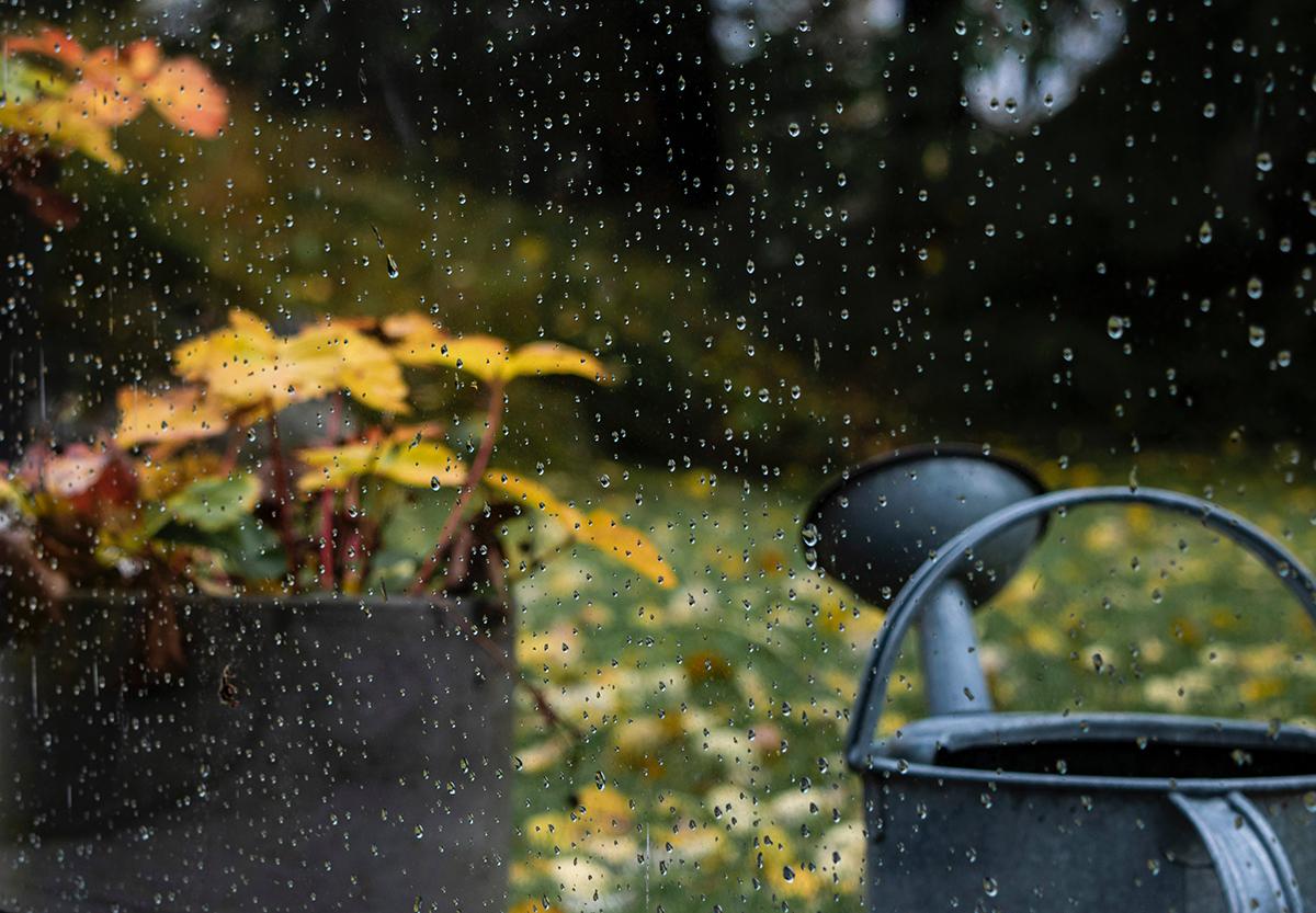 Recoger el agua de lluvia para el riego