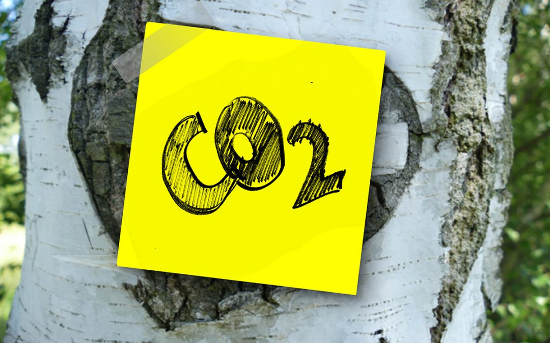 Huella de carbono cero. Cambiar a un nuevo estilo de vida más sostenible
